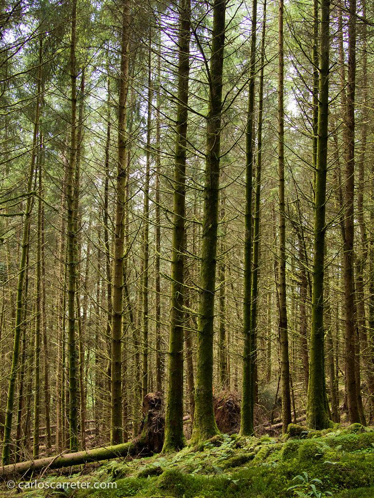 Bosques de Cruach Tarbeit