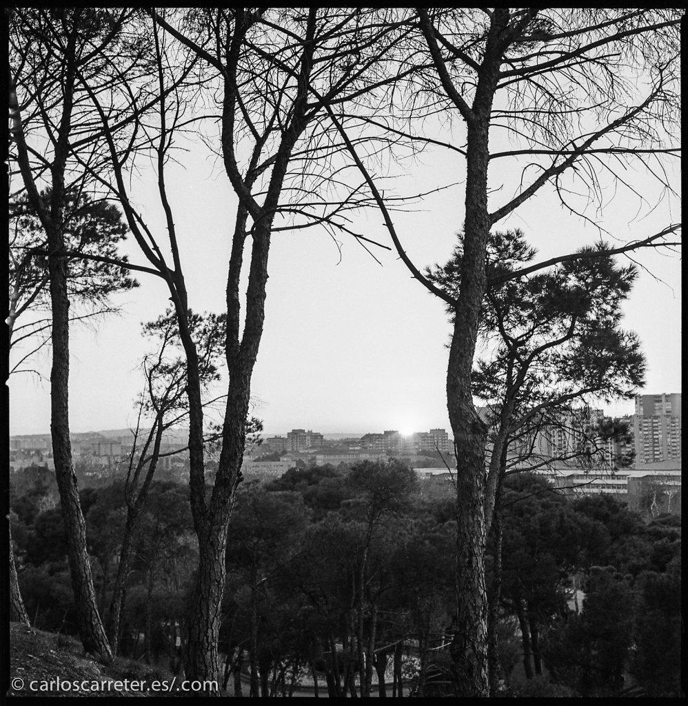 Parque Grande - prueba de Hasselblad 503cx