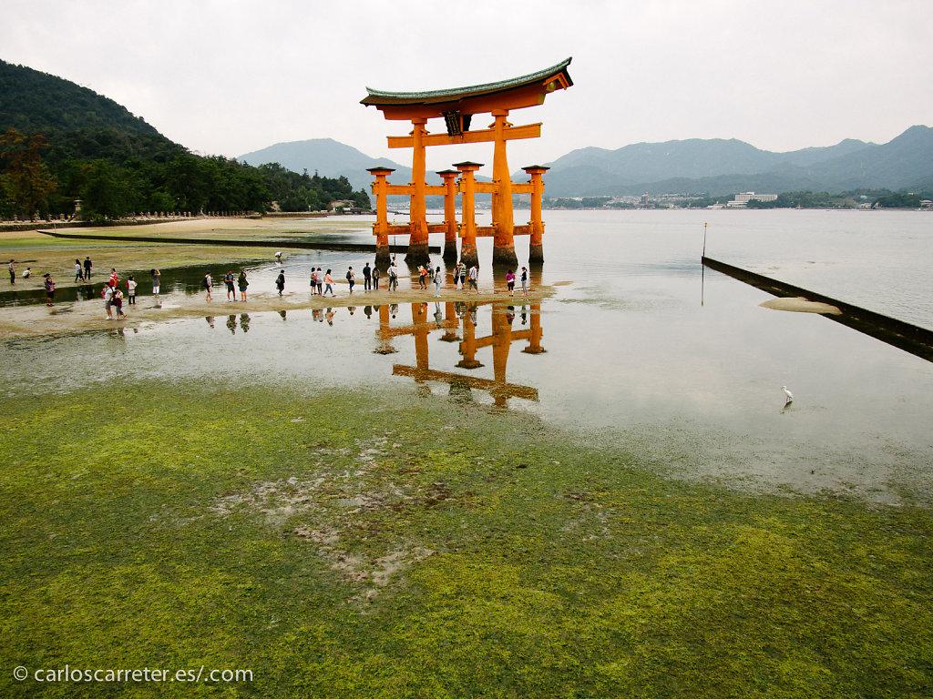 Torii de Itsukushima - Miyajima