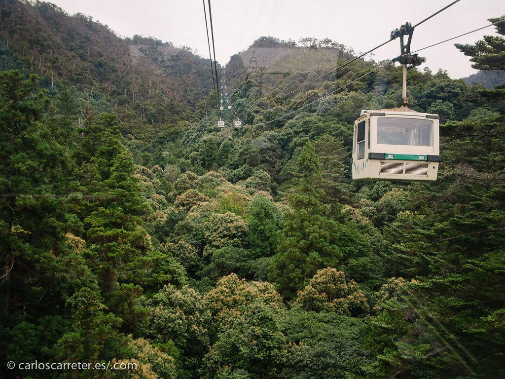 Bosque primoridial de Utsukushima - Miyajima