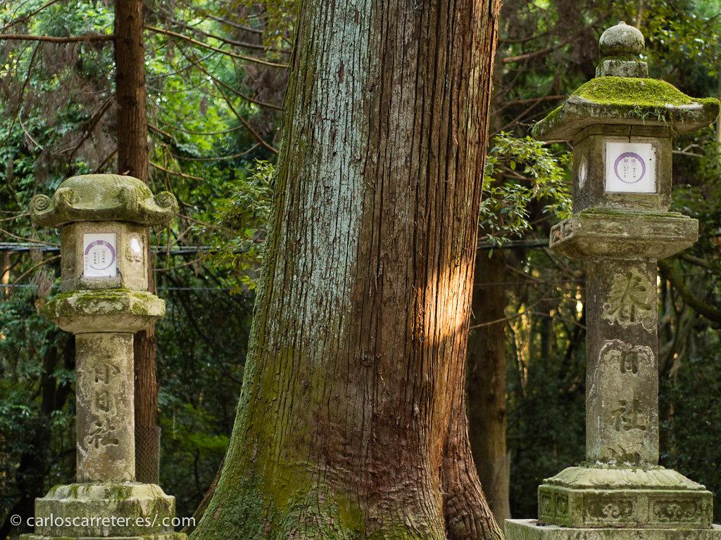 Kasuga-taisha - Nara