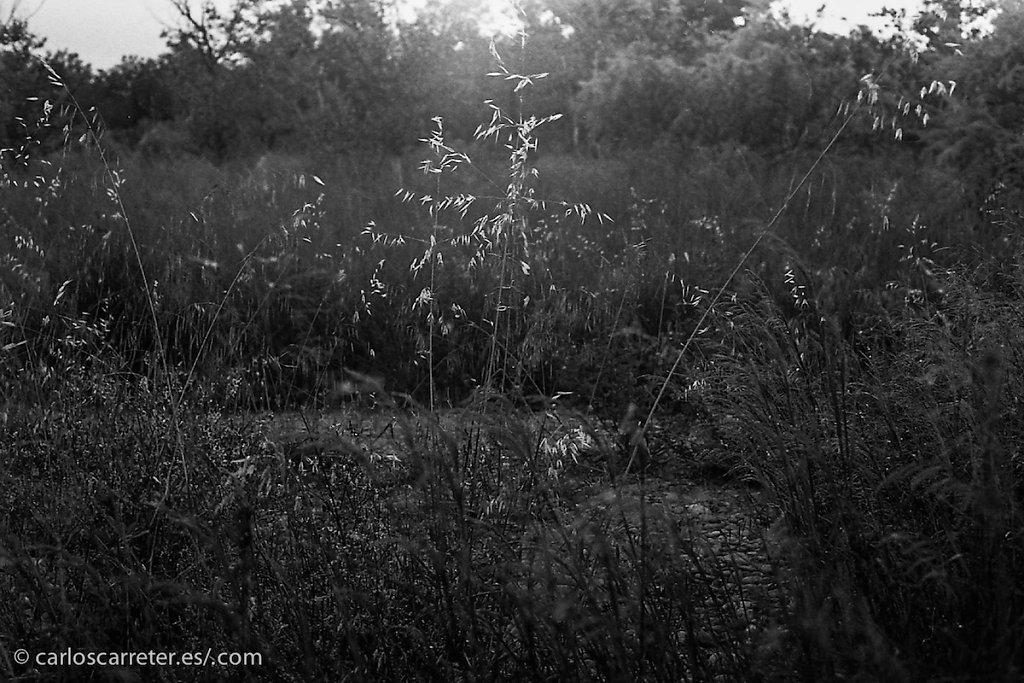 20140518-MX-Across-013.jpg