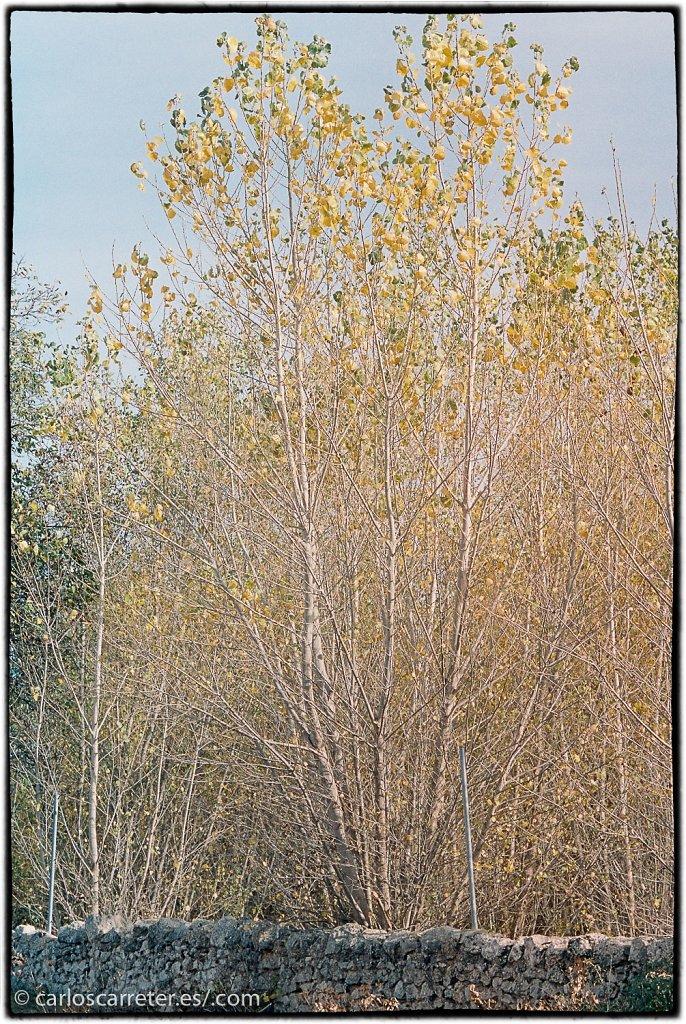Portra400-Azafran-00039.jpg